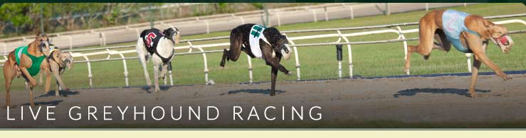 Live Greyhound Racing at Ebro Greyhound Park and Poker Room