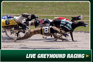 Live Greyhound Racing at Ebro Greyhound Park